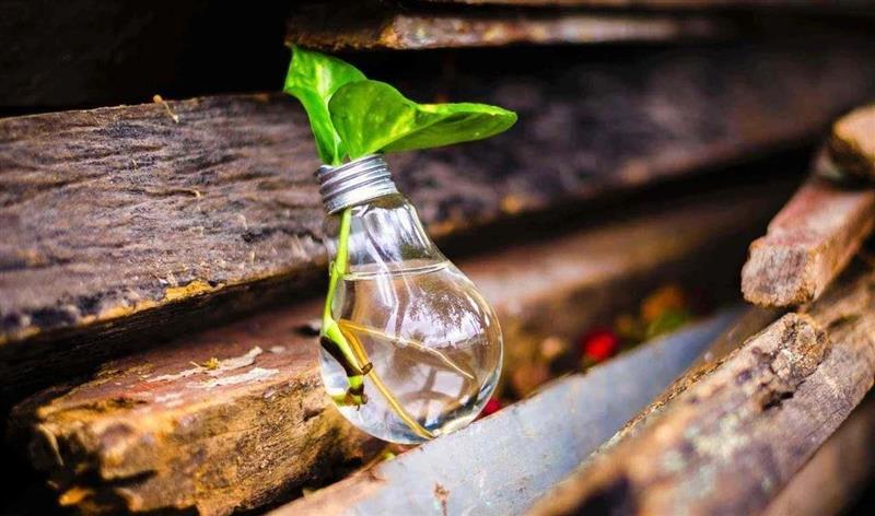 Exemplos de empreendedorismo verde